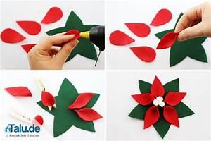 Weihnachtsstern Selber Basteln : weihnachtsstern blume die weihnachtsstern blume ~ Lizthompson.info Haus und Dekorationen