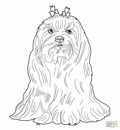 Maltese Coloring Dog Colorear Kleurplaten Dibujos Kleurplaat