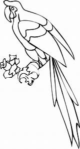 Parrot Coloring Pages Printable Realistic Clip Colouring Monkey Clipart Fun Word Animal Pinclipart Dental Bestcoloringpagesforkids Getcolorings Popular Stuff sketch template
