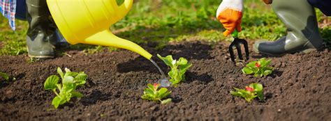 buy garden soil why should i buy high quality soil