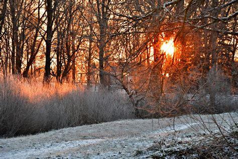 Kādu decembri - Vilku, Ziemas un Svētku mēnesi - prognozē ...