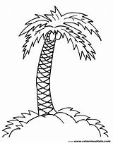 Coloring Tree Palm Pages Leaves Printable Trees Getcolorings sketch template