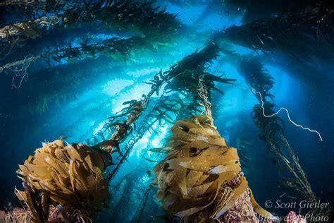 nikon   settings  underwater photography