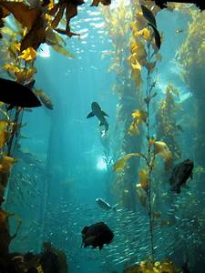 Kelp forest biology project on emaze