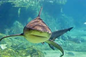 Do Sharks Eat Humans