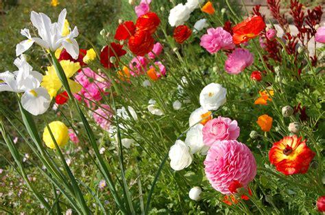 cuisine studio fleurs printemps narcisses tout