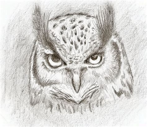 simple owl drawings simple owl sketches