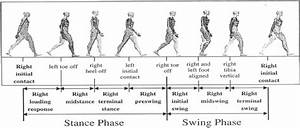 Phases Of A Gait Cycle