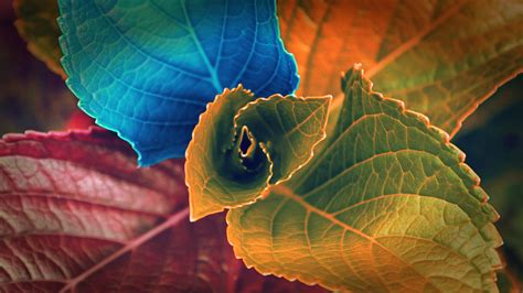 cool color images hd image wallpaper