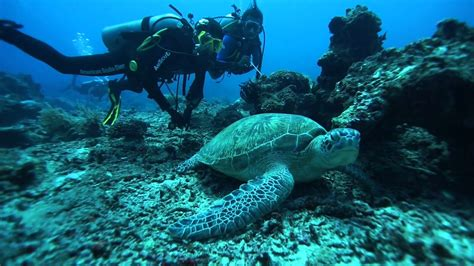 Dive In Lombok by Dive Into Shark Point Gili Trawangan Lombok Indonesia