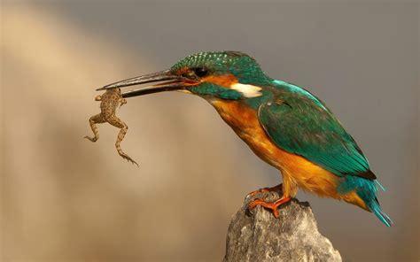bird eating google search vogels pinterest bird