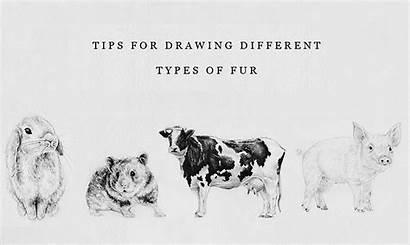 Fur Draw Easy Very