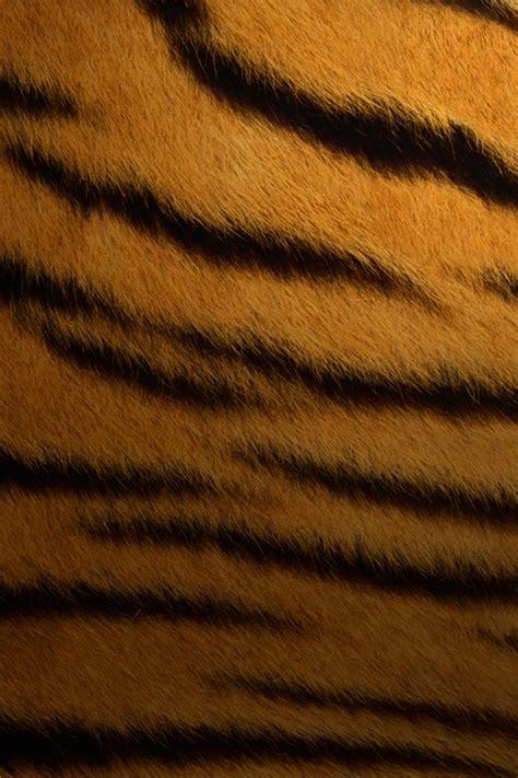 texture tigre texture pattern sfondi  cellulare