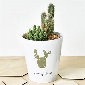 Pot A Cactus : 39 looking sharp 39 cactus plant pot by ellie ellie ~ Farleysfitness.com Idées de Décoration
