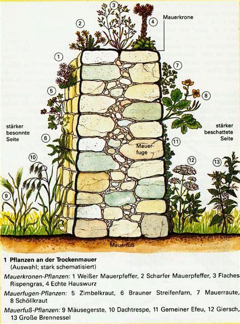trockenmauer aus kalkstein google suche garten rock