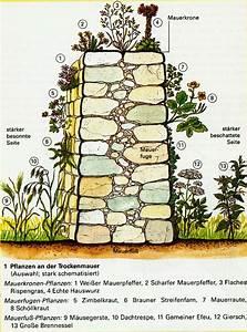 Pflanzen Für Trockenmauer : grose wohnzimmer pflanzen ~ Orissabook.com Haus und Dekorationen