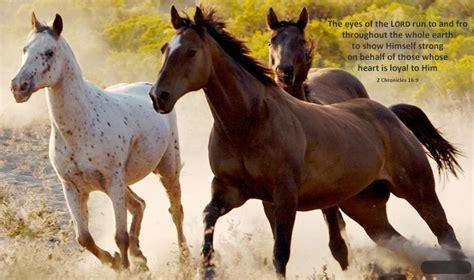 horses running    arid wilderness area