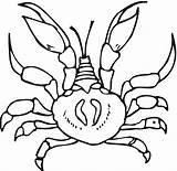 Crab Coloring Printable Krabbe Krab Kolorowanki Granchio Hermit Colorir Dzieci Dla Template Caranguejos Panzer Zeichnung Dem Colorare Desenhos Imprimir Preschool sketch template