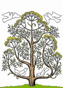 Roots clipart mustard tree - Pencil and in color roots ...