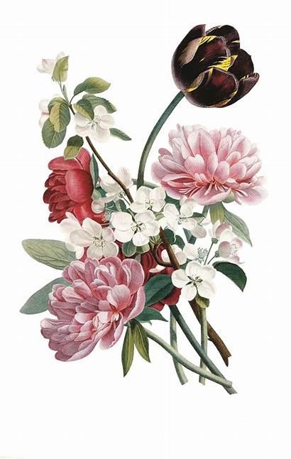Botanical Prints Flowers Jean Louis Prevost Floral
