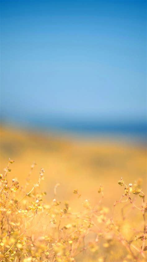 Backgrounds Hd by Wallpaper Meadow 4k Hd Wallpaper Field Plant