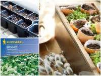 Pfeffer Pflanze Selber Züchten : pflanz tipps f r die tomoffel tomate kartoffel eat smarter ~ Markanthonyermac.com Haus und Dekorationen