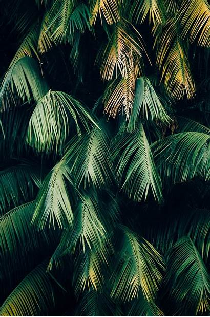 Android Wallpapers Unsplash Fm Max