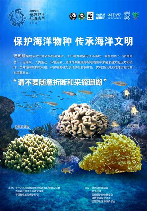 关注世界野生动植物日 携手保护海洋物种--人民网环保频道--人民网