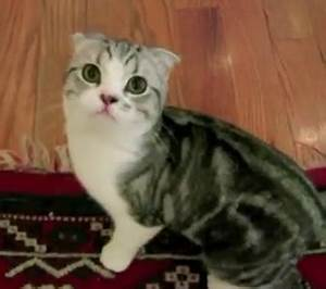 Taylor Swift Isn't Asking For Your ACM Vote…Her Kitty Is ...