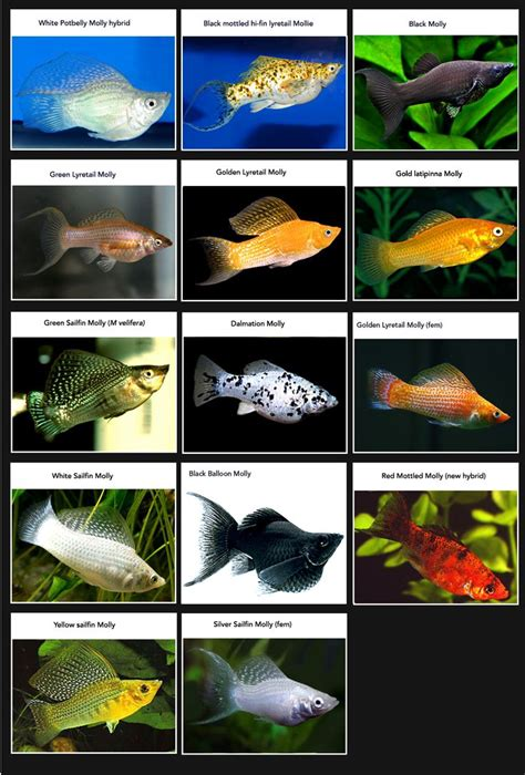 fish aquarium fish  aquarium  pinterest