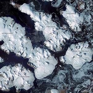 Little auks adapt to warming Arctic | Earth | EarthSky