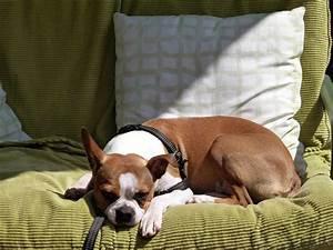 Hundehaare Vom Sofa Entfernen : so entfernst du hundeurin geruch sogar aus dem sofa ~ Bigdaddyawards.com Haus und Dekorationen
