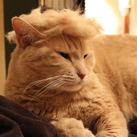 trump cats hair donald ever thing barnorama