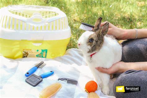 fellpflege bei kaninchen im herbst die besten buersten