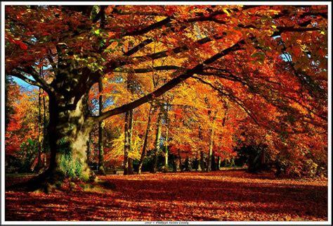 Amazing Autumn Forests (15 photos)