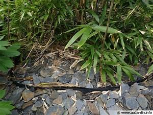 Barrière Anti Rhizome Castorama : la barri re anti rhizomes ~ Dailycaller-alerts.com Idées de Décoration