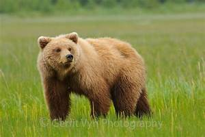 Grizzly-Bear | The Great Outdoors.. | Pinterest | Search