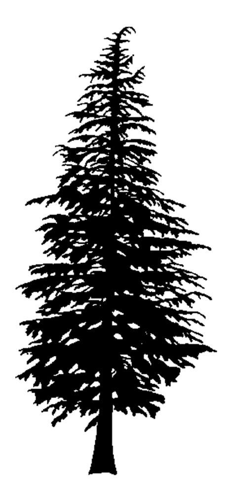 douglas fir silhouette