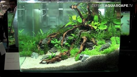 qualifyings   art   planted aquarium  nano category compilation youtube