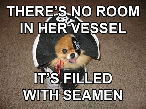 Sexual Innuendo Memes - the 10 best inappropriate sexual innuendo dog that dresses and talks like a pirate memes