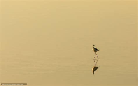 Baixar Wallpaper natureza, pássaro, minimalismo Papis de
