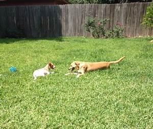 wags whiskers dog walking and pet sitting With thinking outside dog house