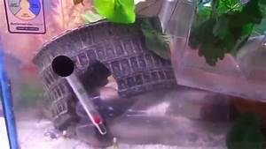Betta fish living with Pregnant Platy fish is not a good ...