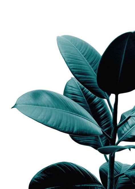 botanical print   plant poster   photo desenio