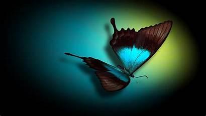 Butterfly Background Desktop Wallpapers