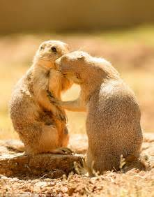 Prairie dogs appear to lean in for a smooch in Greece ...