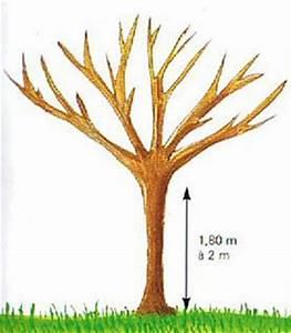 Comment Tailler Un Pommier : la taille des arbres fruitiers ~ Dode.kayakingforconservation.com Idées de Décoration
