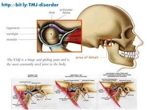 Joint Temporomandibular TMJ Anatomy