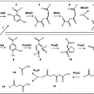 models   hba   hba catabolic pathways