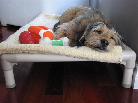Kuranda Bed by Help Shelter Dogs Sleep Better
